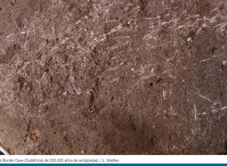Camas de hierbas de 200 mil años de edad.