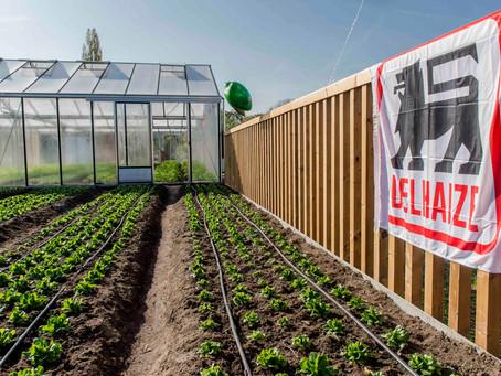 Supermercado en Bruselas vende su propia cosecha