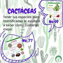 Cactáceas_en_ECOSMEDIA.jpg