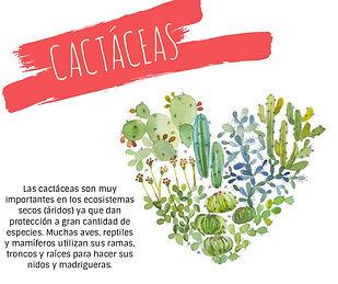 Cactáceas_Face1.jpg