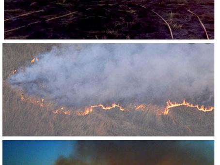 El Delta del Paraná en llamas