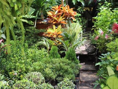 Plantas tropicales no resistirán el cambio climático