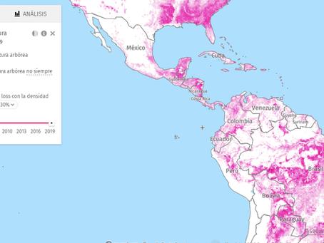 5 países de América Latina dentro del top ten de bosques primarios tropicales más deforestados
