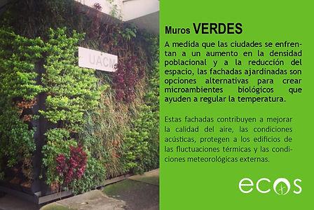 Muros verdes.jpg