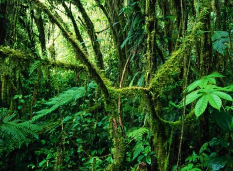 La selva colombiana ya tiene personalidad jurídica