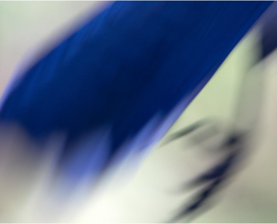 blue-jay-abstract.jpg