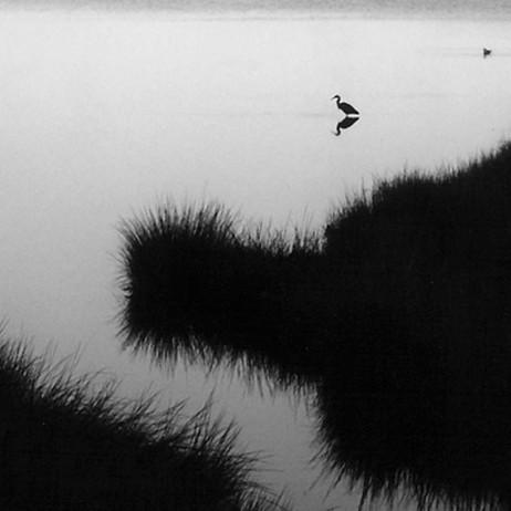 heron-at-5am.jpg