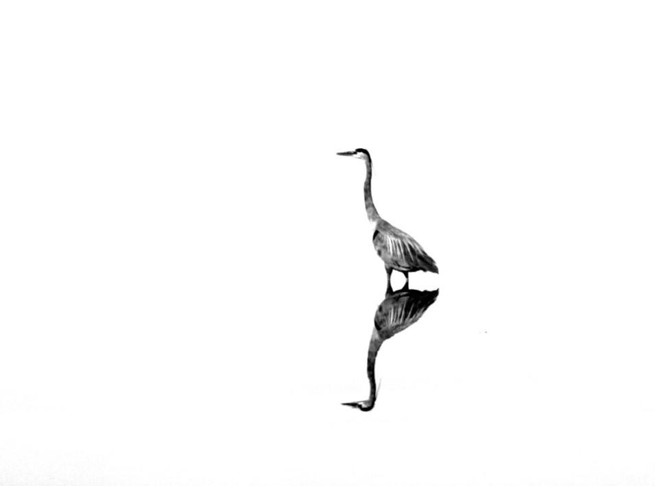 heron-blowout-small.jpg