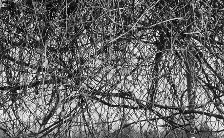 fencesweb.jpg