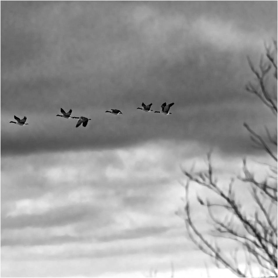bw migration.jpg
