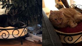 Zerplatzte Katzenträume