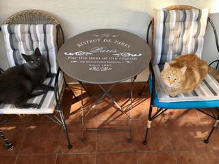 Cat as cat can oder der Katzenmonolog