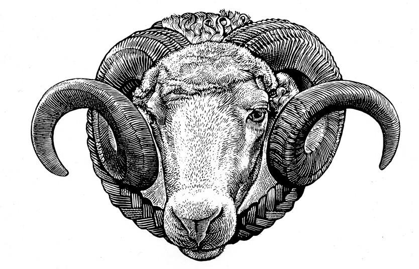 Kemp the Ram