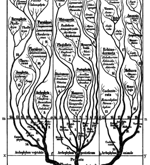 Phylogenetic comparative methods in ecology