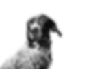 fabian-gieske-VGkq_um-IdE-unsplash_edite