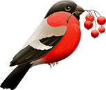 red-robin-3743702_1920.png