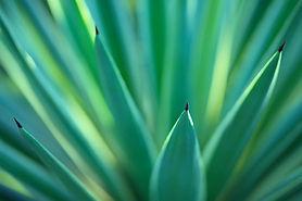 Pflanzen Gewächse