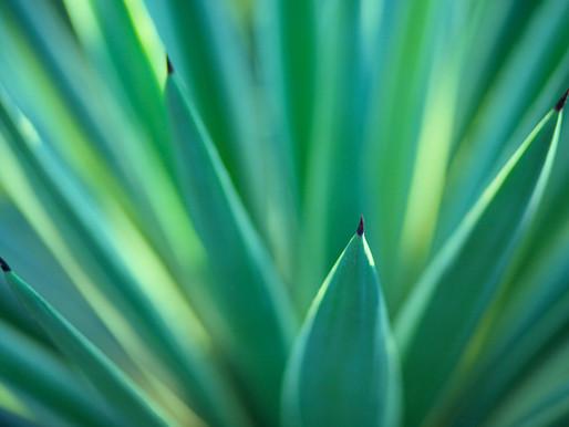 Plantas para respirar mejor en tu casa o apartamento