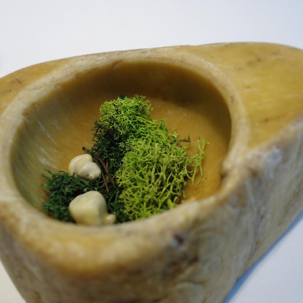St. Georges mushrooms