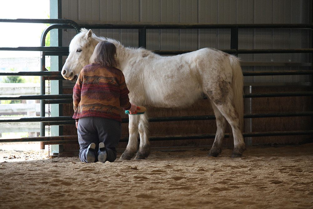 stableLiving_equine_therapy1.jpg