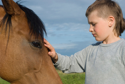 stableLiving_equine_therapy5.jpg
