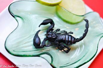 Scorpion noir.jpg