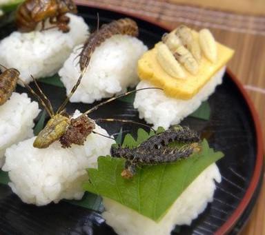 Novel foods: insetti nel piatto? Il Ministero della Salute frena