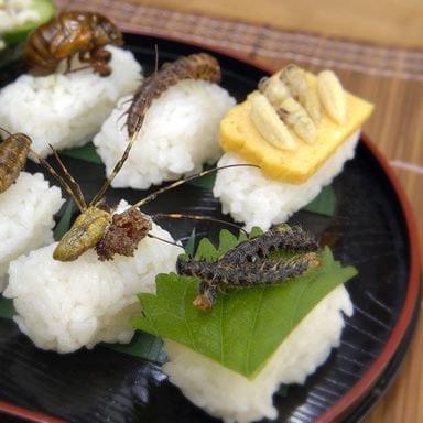 insetti nel piatto come novel food, ma il Ministero della Salute frena.  Studio Legale Corte, food law