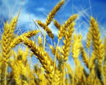 Origine obbligatoria in etichetta per grano e pasta. Decreto inviato a Bruxelles