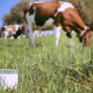 Latte: origine obbligatoria in etichetta per latte e formaggi in Italia, firmato decreto