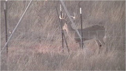 Picture1+feeder+deer.jpg