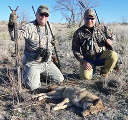 coyoteheader.jpg