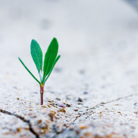 Tranquil Reflections: Growth in the Cracks of Discomfort