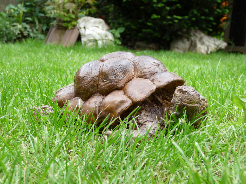 MME TORTUE