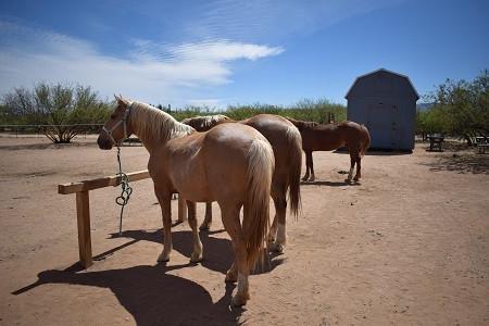 Mustangs J supp.JPG