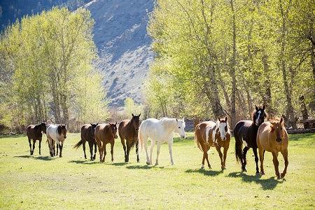 Montana J2.jpg