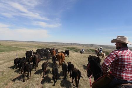 Chez les Cowboys du Saskatchewan 4.jpg