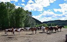 Newsletter Horse Ride Legend - Novembre