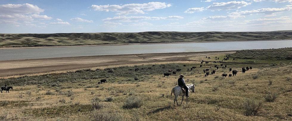 Chez les Cowboys du Saskatchewan gd form