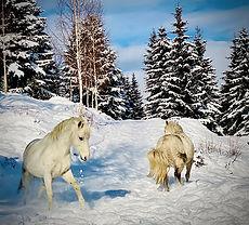 Newsletter horse ride legend Février 202