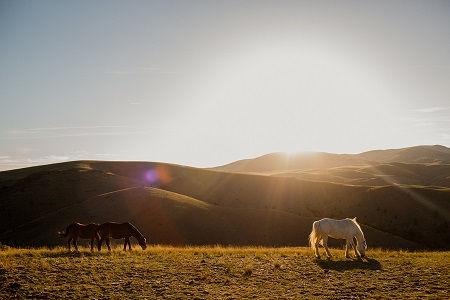 Montana J8.jpg