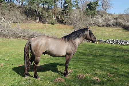 chevaux (3).jpg