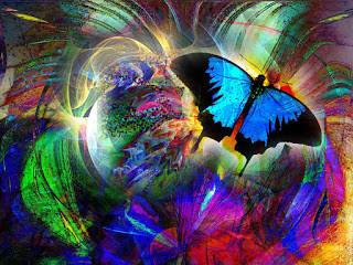 A borboleta que não se sabia bela