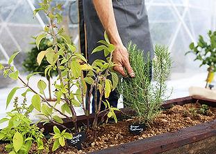 Hand Herb 1 copy 2.jpg