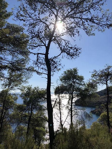 Ağaçlı_Koy