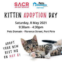 Kitten Adoption Day - Pets Domain Port P