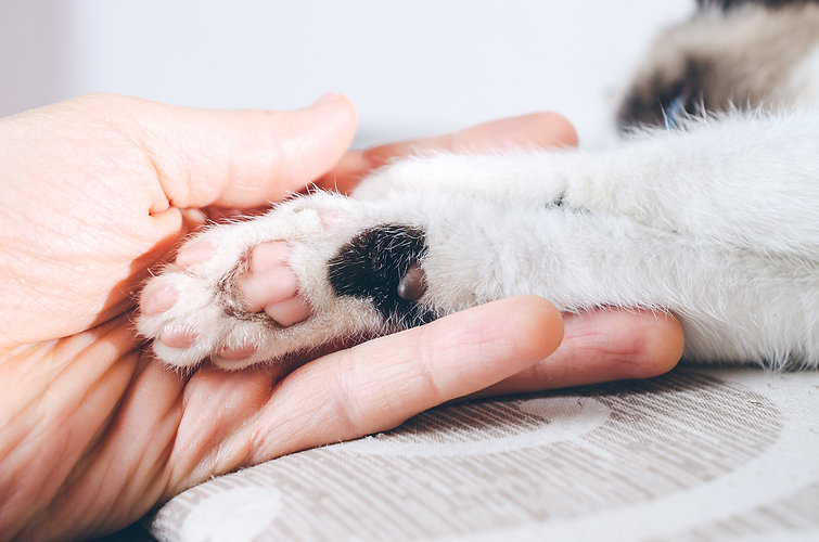 closeup-shot-human-hand-holding-paw-kitt