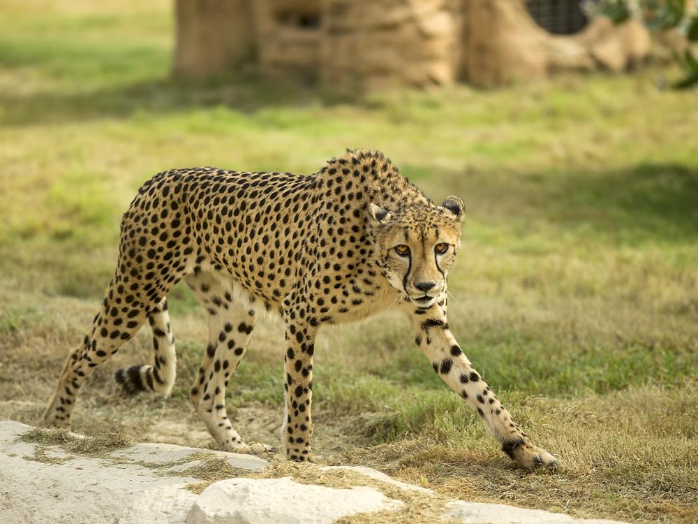 Dubai Safari in Dubai-Dubai Route Group
