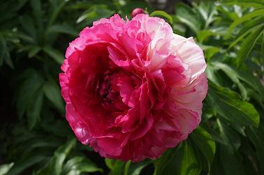 Rose Heart.jpg