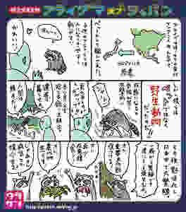 [ラクーンって『アライグマ』って意味だったの??!]  https://ulaken.exblog.jp/26838457/